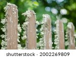 Old Mossy Wooden Fence In...