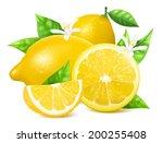 Vector. Fresh lemons with leaves and lemon blossoms.