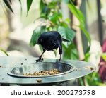 yellow rumped cacique  cacicus... | Shutterstock . vector #200273798
