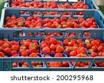 Crates Of Strawberries On The...