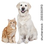 Stock photo domestic cat and golden retriever 200330393