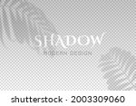 shadow leaves from window....   Shutterstock .eps vector #2003309060