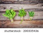 bunches of fresh arugula ... | Shutterstock . vector #200335436