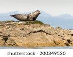 Grey Seal On Rock