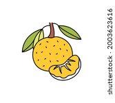 citrus  olor line icon....