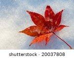 Red Fallen Leaf On Snow