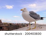 Seagull Against The Background...