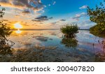 Beautiful Mangrove Swamp At...