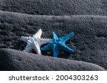White And Blue Starfish On...