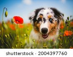 Cute Puupy Dog In Flowers...