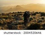 Kilimanjaro In Tanzania The...