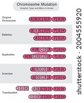 chromosome mutation types and... | Shutterstock .eps vector #2004555920