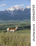 antelope on hill with mountains ... | Shutterstock . vector #200465939