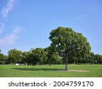 fresh green park and blue sky   Shutterstock . vector #2004759170