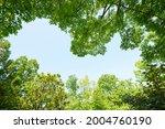 fresh green trees and sunbeams   Shutterstock . vector #2004760190