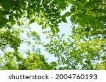 fresh green trees and sunbeams   Shutterstock . vector #2004760193