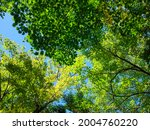 fresh green trees and sunbeams   Shutterstock . vector #2004760220