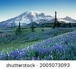 Washington State  Mount Rainier ...