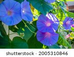 Beautiful Purple And Blue...