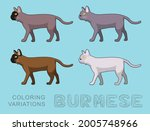 cat burmese coloring variations ...   Shutterstock .eps vector #2005748966