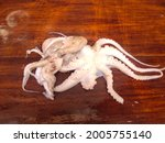 Small photo of selective focus on group of octopuses(Octopods) on wooden background