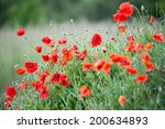 papaver rhoeas common names... | Shutterstock . vector #200634893