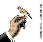 The Goldfinch. The Male Hand On ...