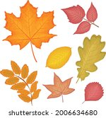 a bright autumn set with the... | Shutterstock .eps vector #2006634680