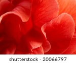 Macro Of Red Hibiscus Rosa...