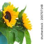 Sunflowers  Flowers Bouquet...