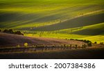 wavy agricultural field of...   Shutterstock . vector #2007384386