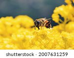 Honeybee Being Happy About...