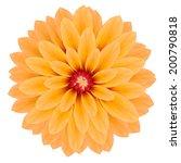 yellow chrysanthemum flower....   Shutterstock .eps vector #200790818