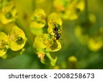 Ant On A Yellow Green Sun...
