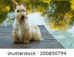 Scottish Terrier Dog Sitting...