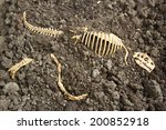 Tyrannosaurus Rex Bones Buried...