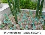 Tall Green Cactus Pot At Patio