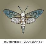 sphingidae hawk moths vector...   Shutterstock .eps vector #2009164466