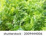 Garden Background   Lush Green...