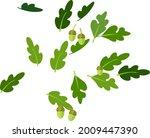 cartoon green oak leaves and... | Shutterstock .eps vector #2009447390