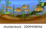 underwater pond landscape with... | Shutterstock .eps vector #2009458046