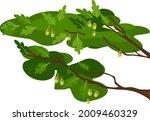 abstract cartoon oak branches... | Shutterstock .eps vector #2009460329