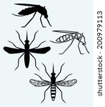 Silhouettes Of Mosquito. Image...