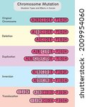 chromosome mutation types and... | Shutterstock .eps vector #2009954060
