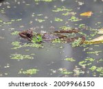 Macro Photography Of Frog In...