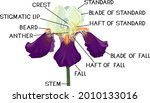 parts of iris flower isolated... | Shutterstock .eps vector #2010133016