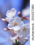 an image of cherry tree | Shutterstock . vector #201027380