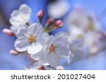 an image of cherry tree | Shutterstock . vector #201027404