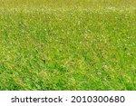 green grass on the field... | Shutterstock . vector #2010300680