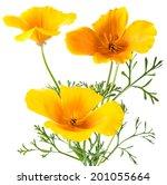 flower eschscholzia californica ... | Shutterstock . vector #201055664